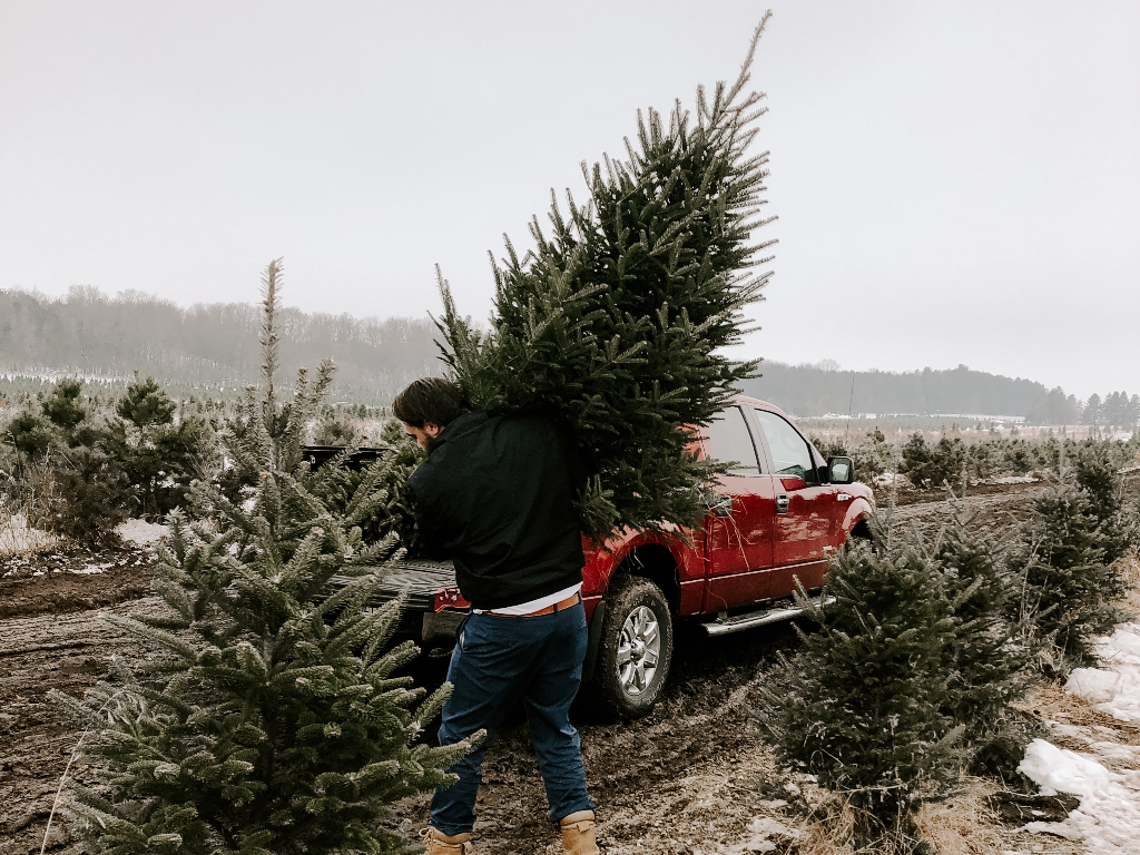 a person carrying an evergreen tree to their truck